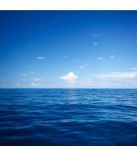 หัวน้ำหอม กลิ่น โอเชี่ยน(Ocean) -PC0069 450 ml.