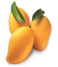 Mango Fragrance มะม่วง 44 (1 kg)