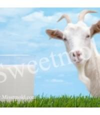 หัวน้ำหอม กลิ่น นมแพะ goat milk 450ml.