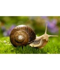 ผง Snail 1kg.