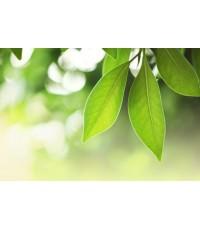 หัวน้ำหอม herbal green 1kg
