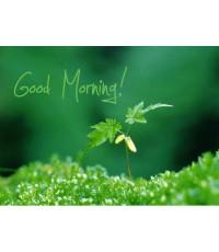 หัวน้ำหอมกลิ่น double fresh morning 1000ml