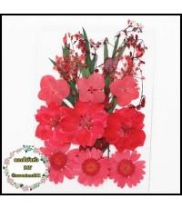 ดอกไม้แห้งตกแต่งจากธรรมชาติDiy(แบบที่3)