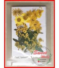 ดอกไม้แห้งตกแต่งจากธรรมชาติDiy(แบบที่13)