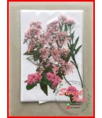 ดอกไม้แห้งตกแต่งจากธรรมชาติDiy(แบบที่15)