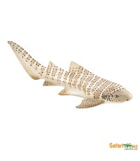 SFR 223329:Zebra Shark