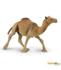 SFR 222429*:Dromedary Camel