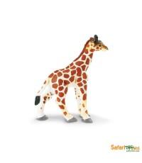 Safari Ltd. : SFR270729* โมเดลสัตว์ Giraffe Baby