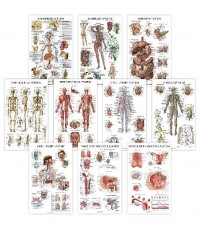 Anatomical : ANCAMZ001* โปสเตอร์รูปภาพ Chart Anatomical Poster Set