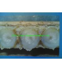 นมผึ้ง หรือ Royal Jekky ราคาส่ง ติดต่อ 0819603360
