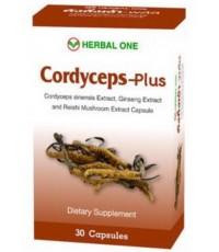 ตังถั่งเฉ้า พลัส สมุนไพร บำรุงร่างกาย ของ อ้วยอันโอสถ Cordyceps plus by Herbal One