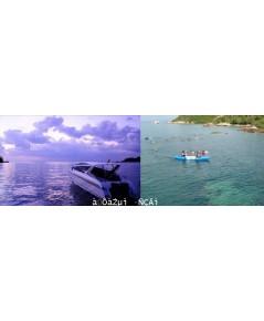 โปรแกรมทัวร์,ดำน้ำดูปะการังจันทบุรี,หาดเจ้าหลาว,OASIS Sea World,โอเอซิสซีเวิลด์,ปลูกป่าชายเลน