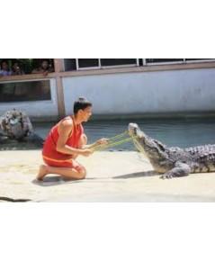 โปรแกรมท่องเที่ยว,โปรแกรมเที่ยว,ฟาร์มจระเข้สมุทรปราการ,Samut Prakarn Crocodile Farm