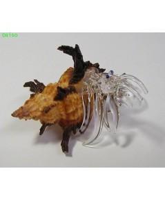 เปลือกหอย /เปลือกหอย ปูเสฉวน รหัส SH Glass 19-M