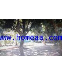 ที่ดินเปล่า พร้อมสวนผลไม้ ถนนราชพัสดุ เนื้อที่ 344.30 ตร.วา ต.ปางหมู อ.เมือง จ.แม่ฮ่องสอน