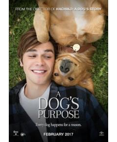 A DOG'S PURPOSE (2017)[พากย์อังกฤษ-บรรยายไทย/อังกฤษ] 1 Disc