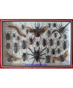 รวมแมลง กล่องใหญ่
