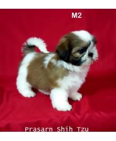 ลูกสุนัขชิสุเกิดวันที่ 23/02/2561 - M2