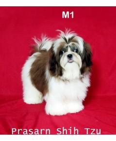 ลูกสุนัขชิสุเกิดวันที่ 5/02/2561 - M1