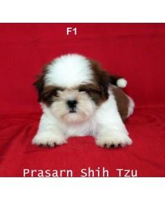 ลูกสุนัขชิสุเกิดวันที่ 20/05/2561 - F1