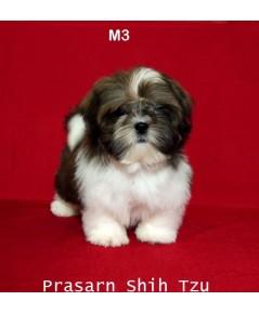 ลูกสุนัขชิสุเกิดวันที่ 5/06/2561 - M3