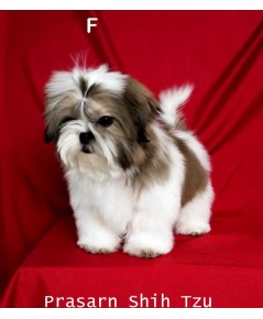 ลูกสุนัขชิสุเกิดวันที่ 25/06/2561