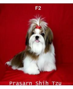ลูกสุนัขชิสุเกิดวันที่ 20/05/2561 - F2