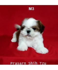 ลูกสุนัขชิสุเกิดวันที่ 2/01/2562 - M3