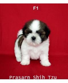 ลูกสุนัขชิสุเกิดวันที่ 8/02/2562 - F1