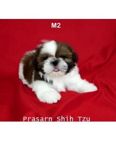 ลูกสุนัขชิสุเกิดวันที่ 2/01/2562 - M2