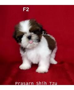 ลูกสุนัขชิสุเกิดวันที่ 8/02/2562 - F2
