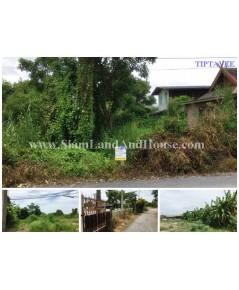 12233 ขายที่ดิน 1 ไร่กว่า ลำโพ บางบัวทอง นนทบุรี