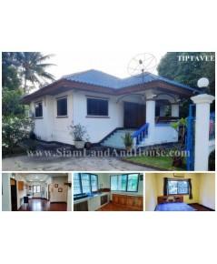 71032 ให้เช่าบ้านเชียงใหม่ บ้านศรีบัวเงิน ท่าศาลา เชียงใหม่