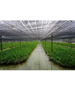 ปลูกผักชีฝรั่ง ส่งขายตลาดค้าส่งใหญ่ สร้างเงินหมื่นได้ ด้วยพื้นที่ 1ไร่