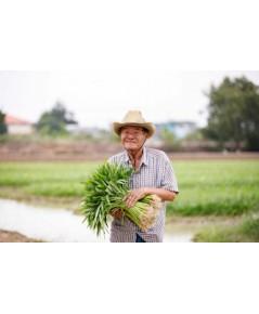 เกษตรกรคนขยัน เช่าที่ปลูกผัก เก็บผลผลิตขายในเซเว่นฯ ได้จับเงินทุกวัน