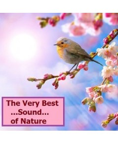 Very Best Sound of Nature/DVD Mp3 (1แผ่น) รวมเสียงธรรมชาติเพื่อการผ่อนคลายและสมาธิ [ไม่มีเสียงดนตรี]