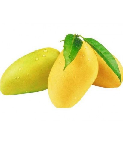 Mango Fragrance มะม่วง A 450ml